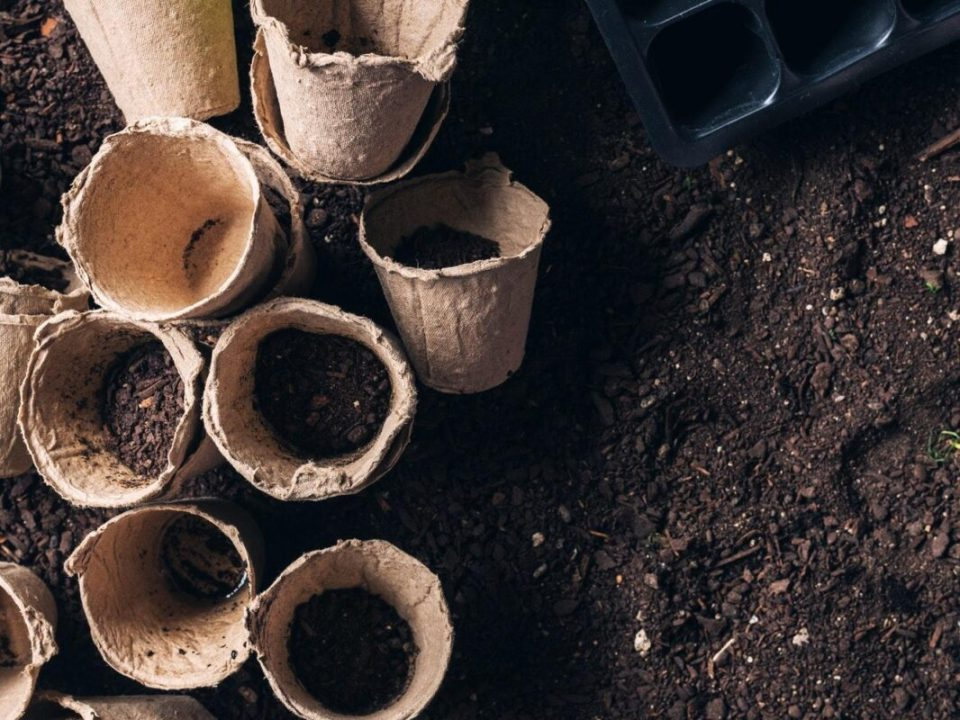 Biodegradable peat pot on greenhouse compost humus soil